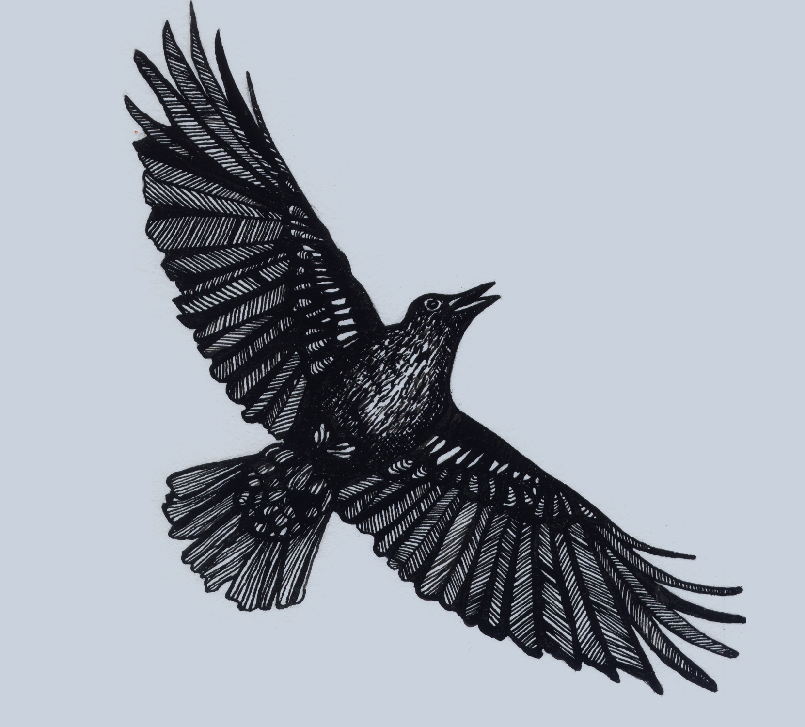 crow flyingCrow Flying Away Drawing